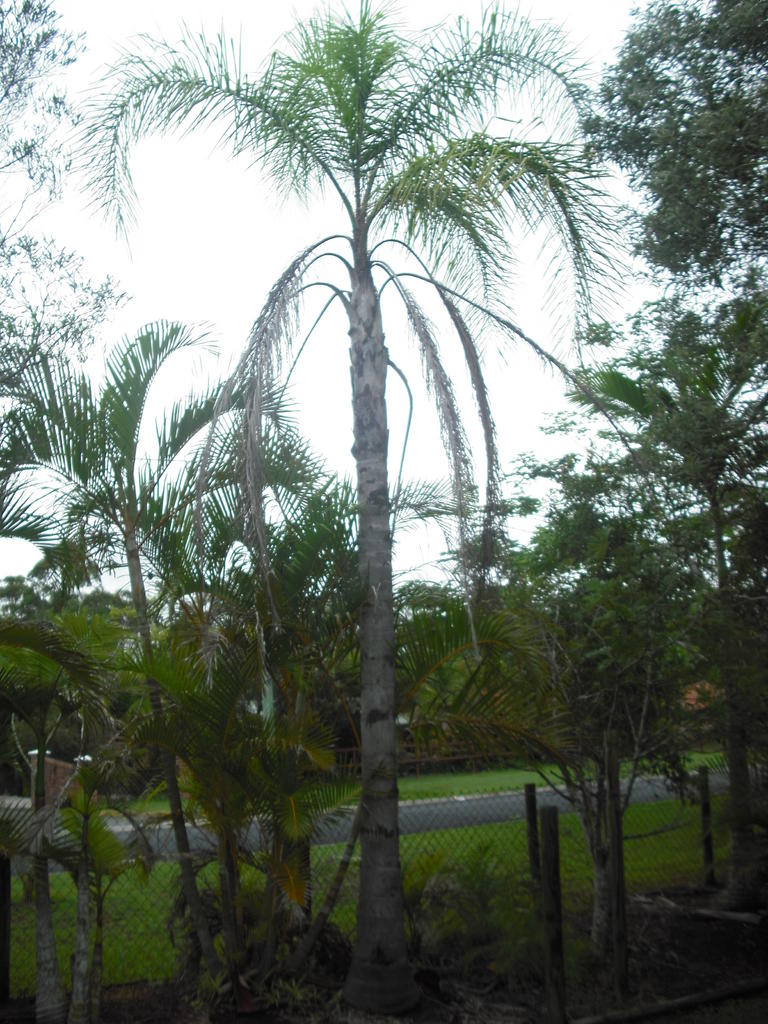 Palm Sale