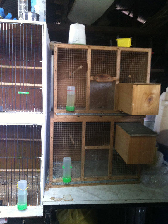 how to build budgie breeding cages