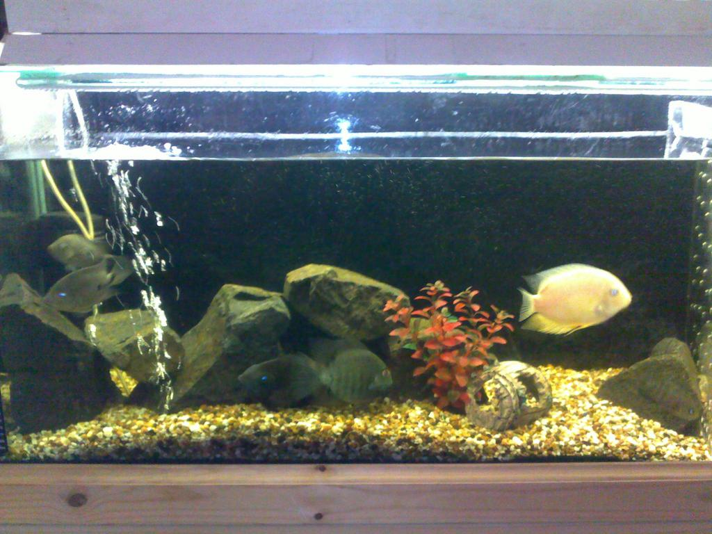 Aquariums and fish tanks for sale amazing amazon pin for Amazon fish tanks for sale
