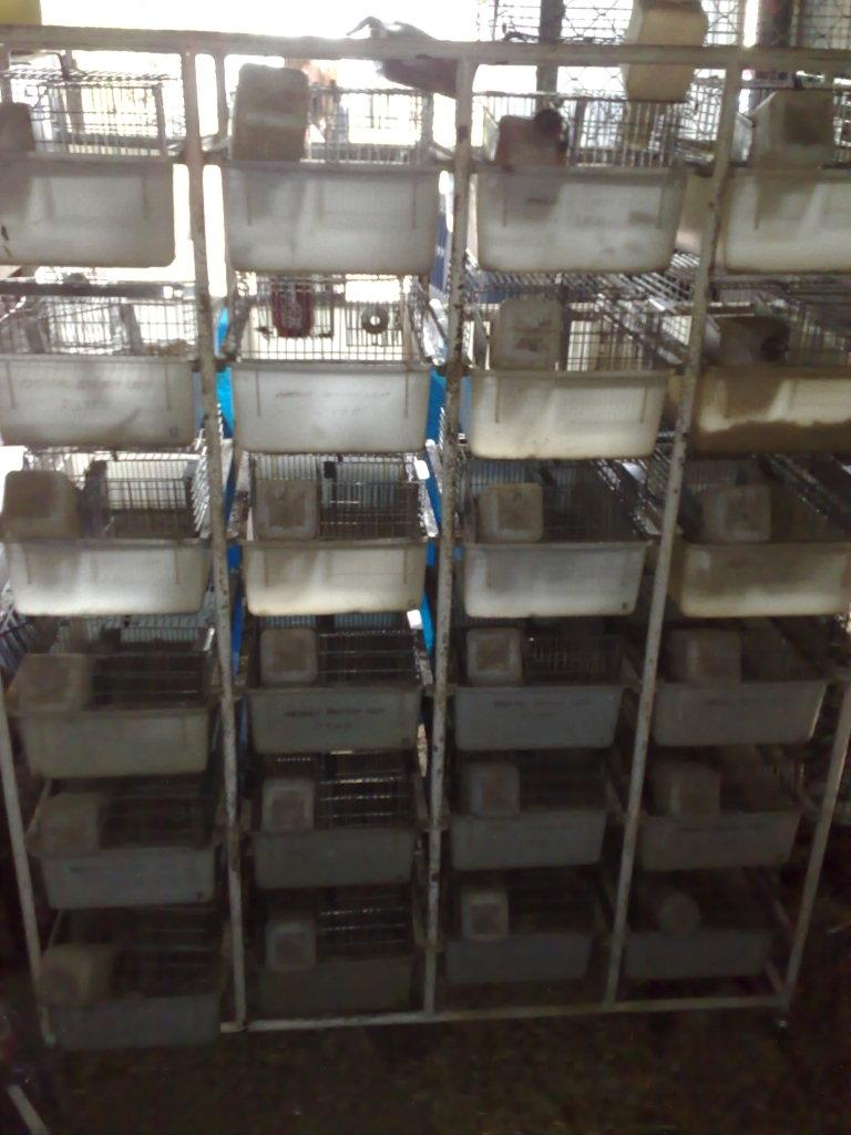 Car Parts And Accessories >> FOR SALE: Rat breeding cages on stand