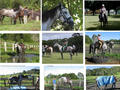 Picture(s) of KKK-Katie Thoroughbred will swap available