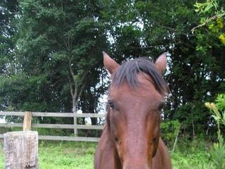 For Sale Give Away 14 Yr Old Male Horse